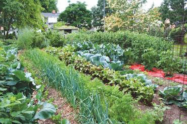 Vegetable gardening classes in St Pete