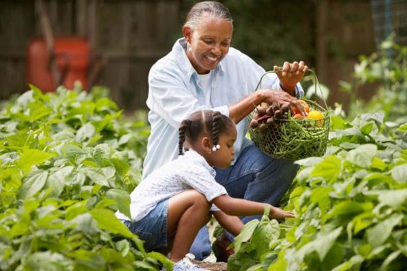 Growing Summer Savings in the Garden