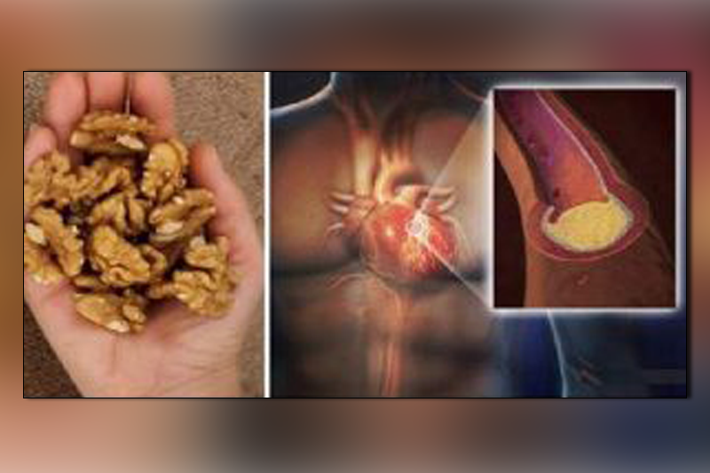 Eat 5 Walnuts, Wait for 4 Hours and See the Results. Amazing!