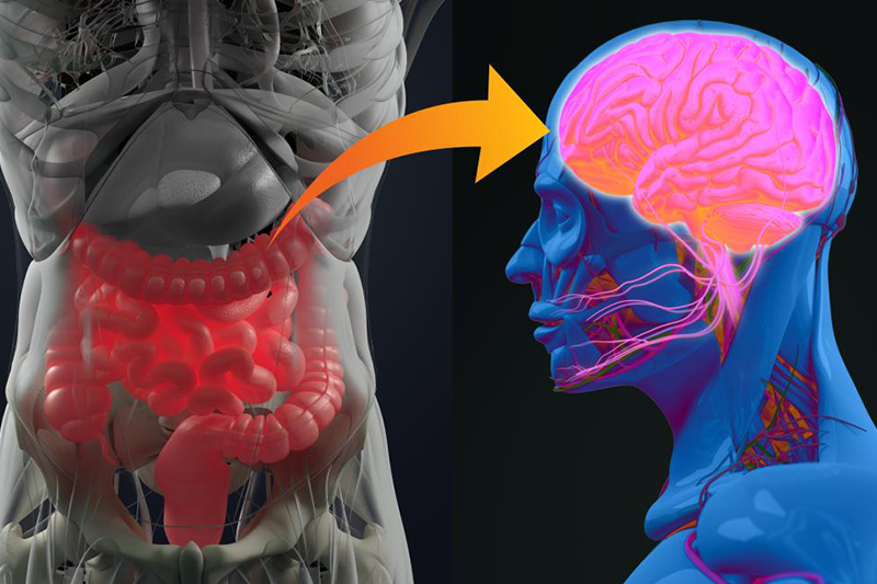 How inflammation and gut bacteria influence autism