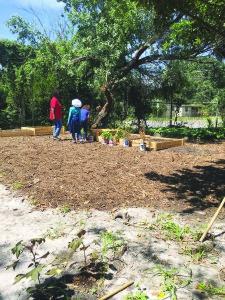 Kids Kitchen Garden
