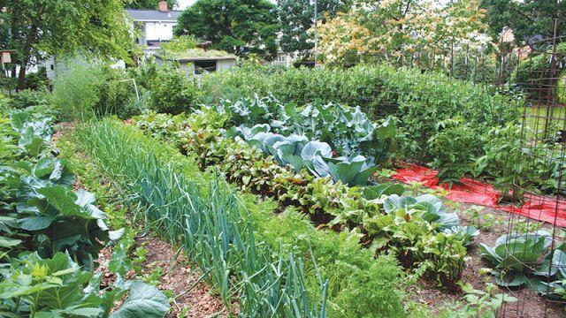 VegetableGard.jpg