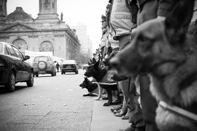 history-police-dogs.png