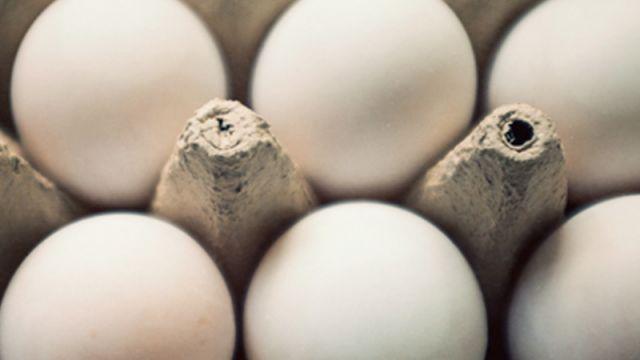 EggSafety.jpg