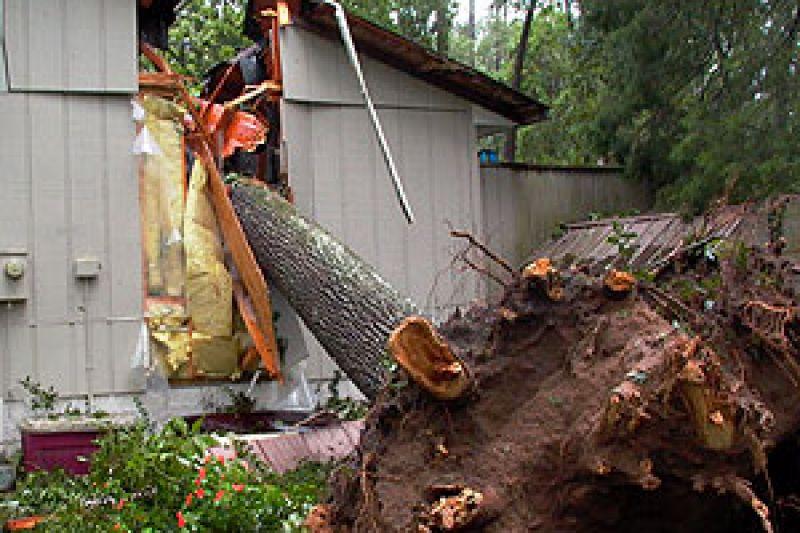 constructiondamagedroots-tree-on-house.jpg