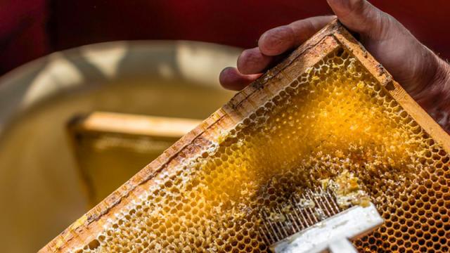 health-raw-honey.png