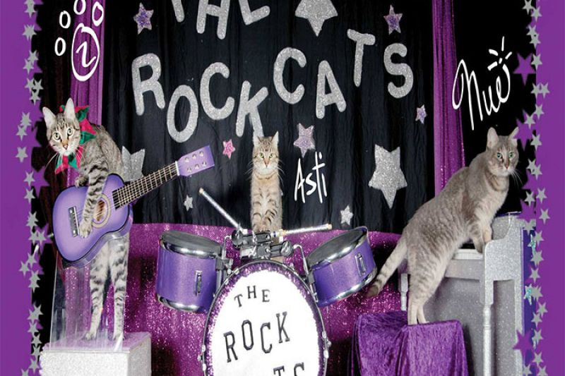 rockcats_700.jpg